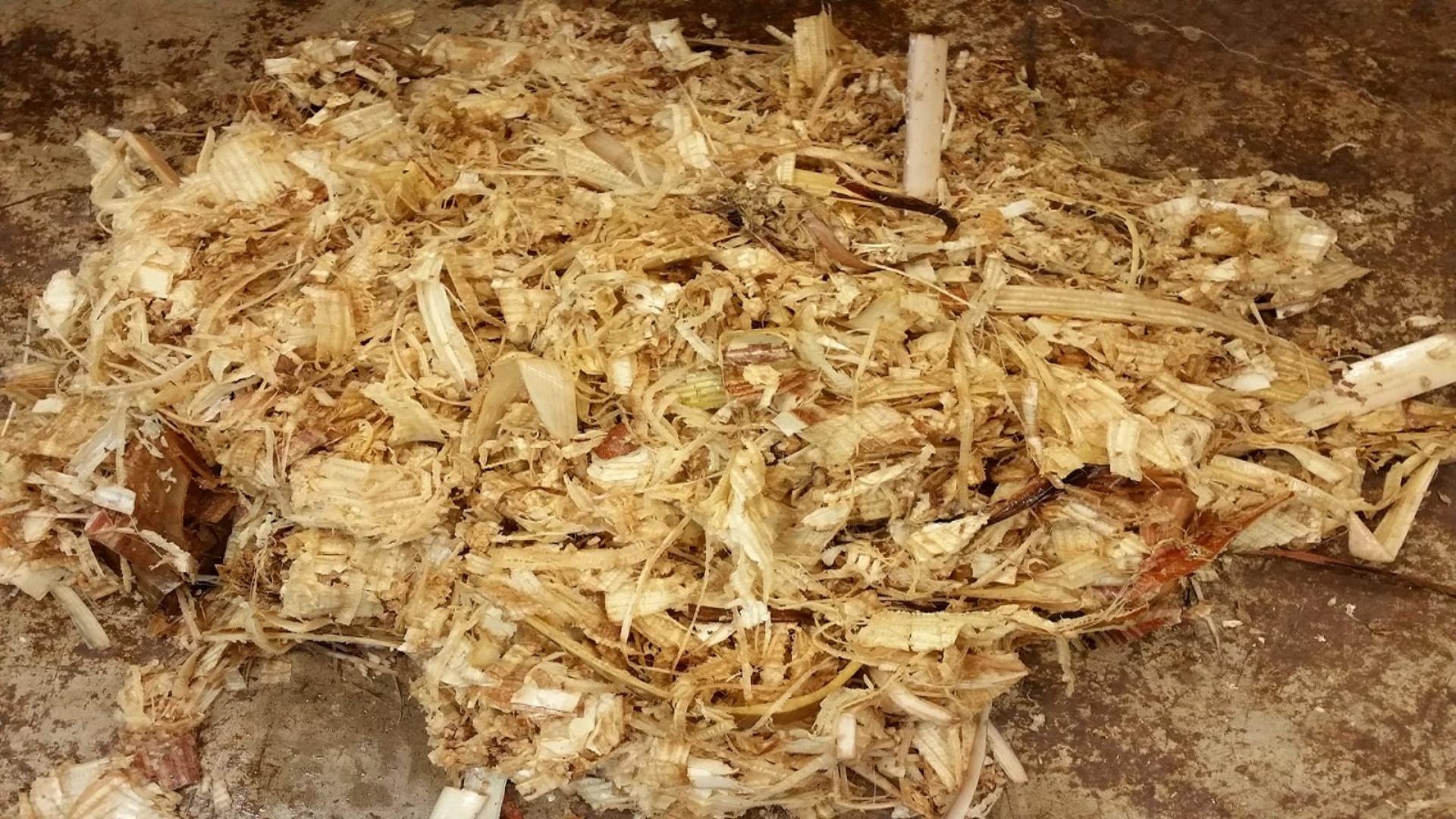 Pulpa obtenida en el proceso de extracción de fibra (Pulp obtained in the fibre extraction process)