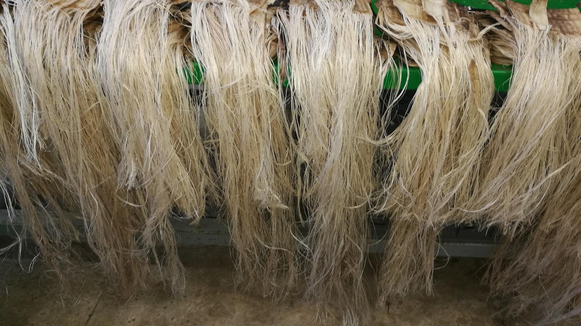 Fibra de platanera (Banana fibre)
